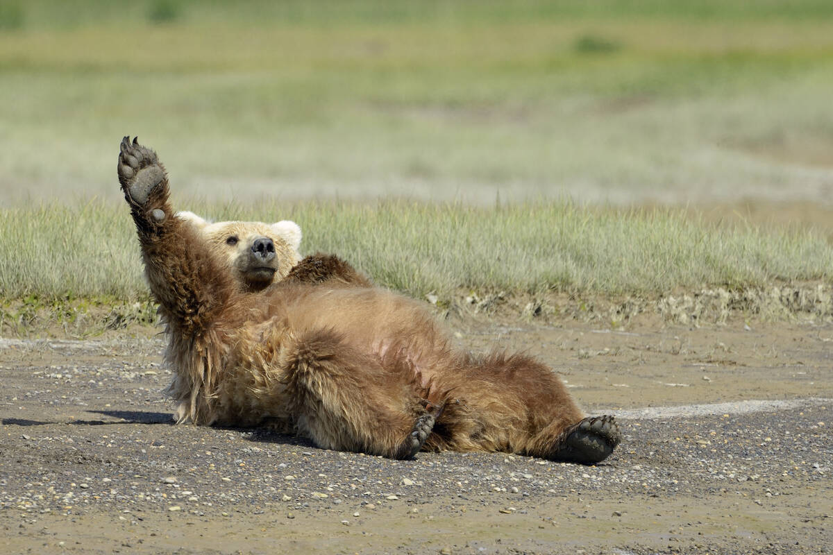 Bezienswaardigheden Homer Alaska Tioga Tours