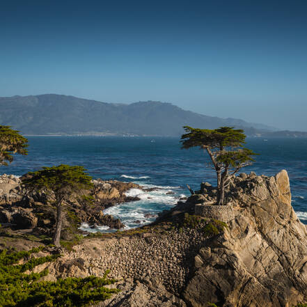 Lone Cypress 17 Mile Drive California