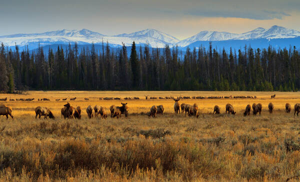 Rocky Mountain National Park in Colorado, eland in Kawuneechee Valley