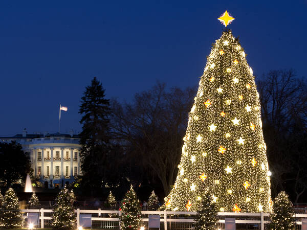 Washington DC Christmas Tree