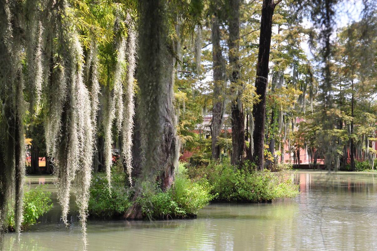 Baton Rouge Area Swamp Tours