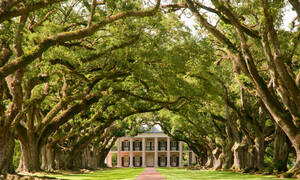 Oak Alley Plantation Vacherie