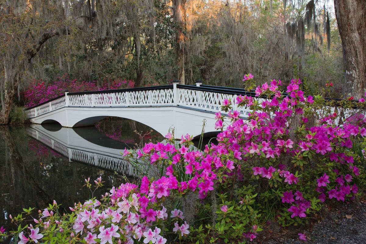 Bezienswaardigheden Charleston South Carolina