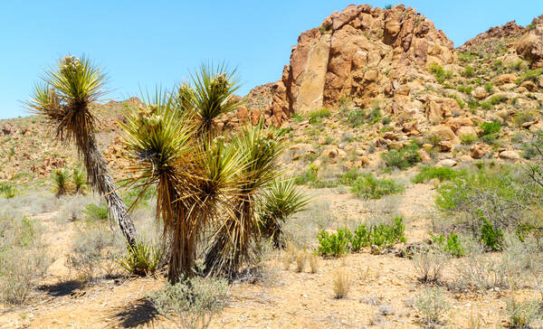 Chihuahuan Desert, Big Bend Ranch State Park