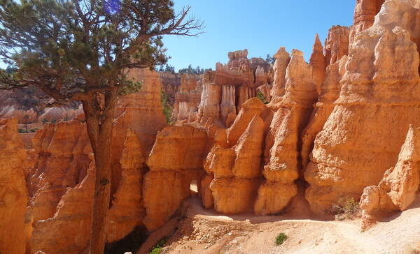 Queens Garden, leuke trail in Bryce Canyon