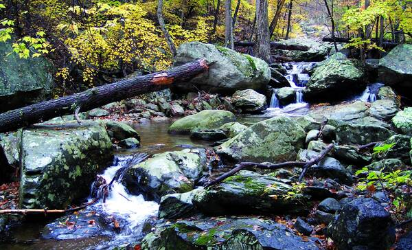 Whiteoak Canyon Shenandoah NP in Virginia
