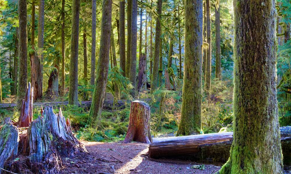 Sol Duc Valley, Olympic Park