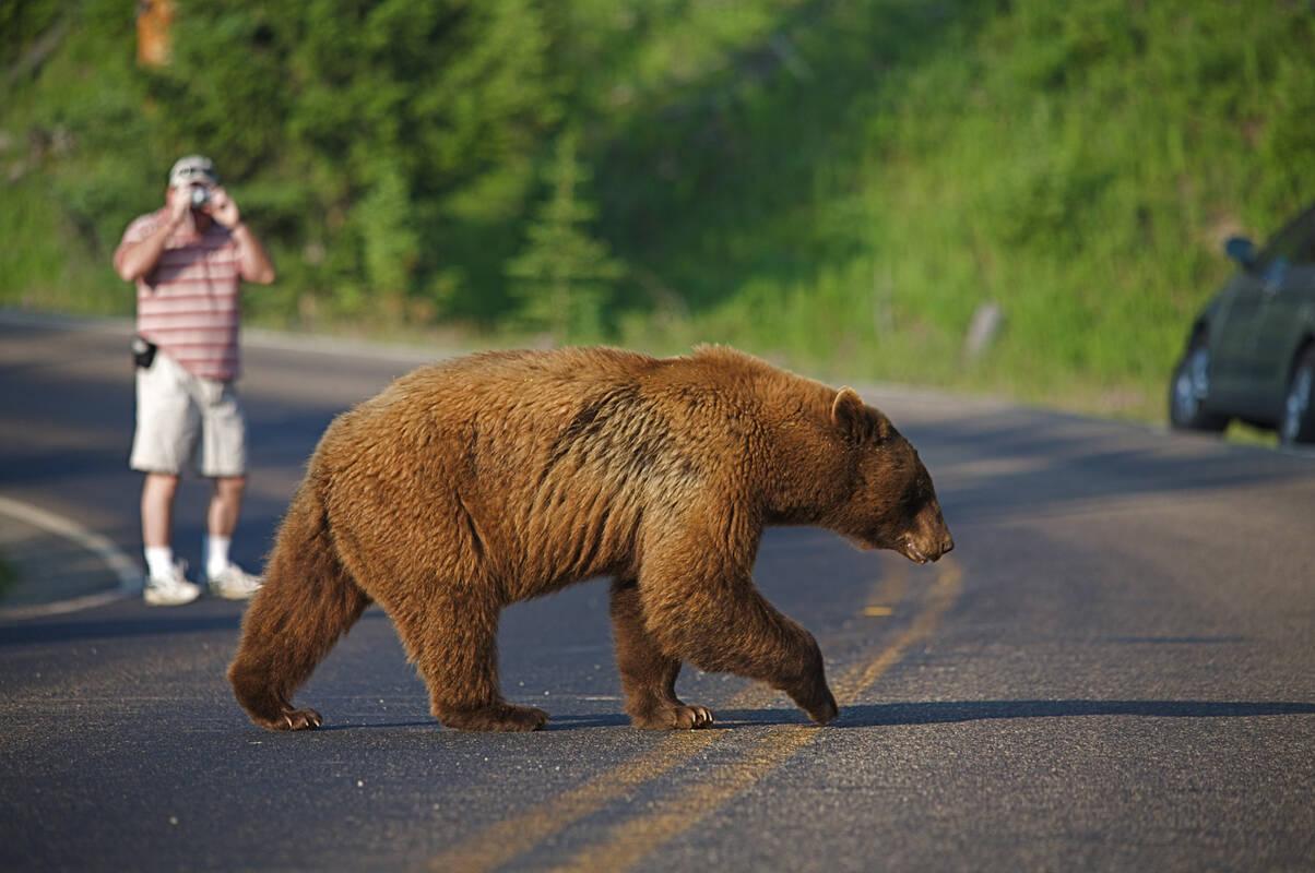 Nieuw Beren spotten - Tioga Tours SO-93