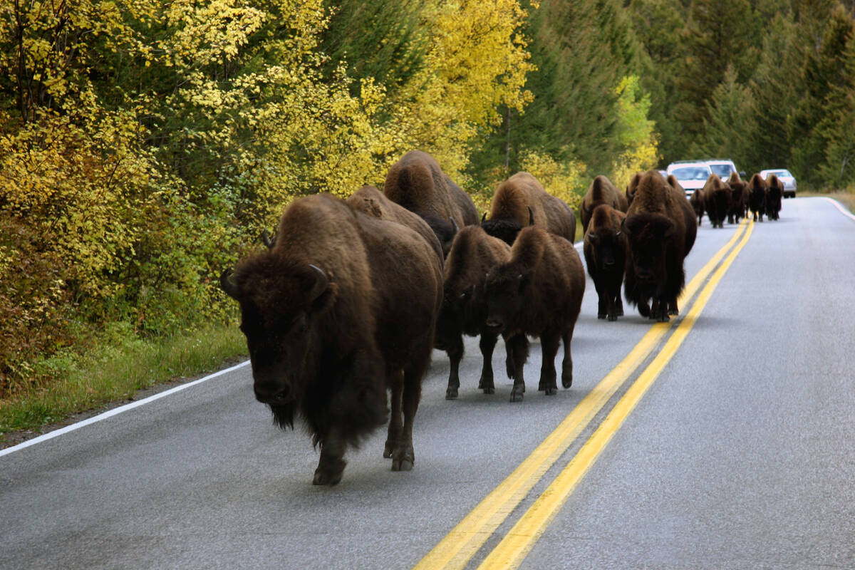 Yellowstone A National Park Tours