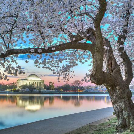 Washington tijdens Cherry Blossom