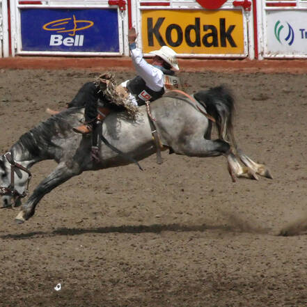 De Calgary Stampede is een beroemde rodeo in Calgary