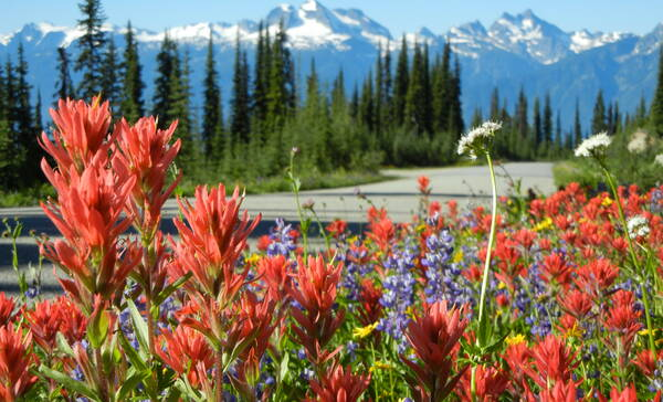 Meadows in the Sky, de parkweg in Mount Revelstoke National Park