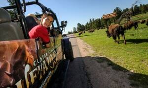 Buffalo Safari Jeep Tour