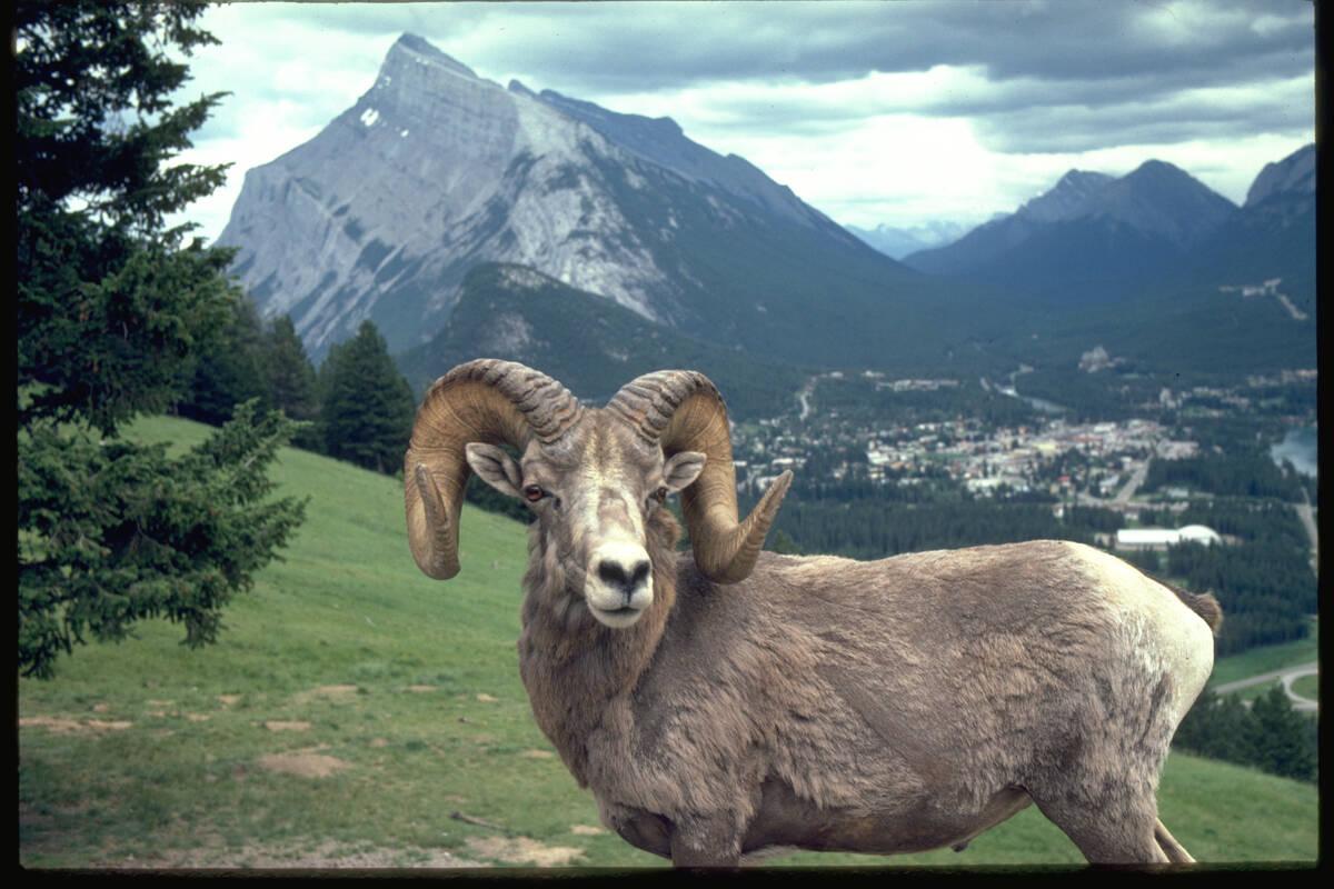 excursies bij banff  alberta